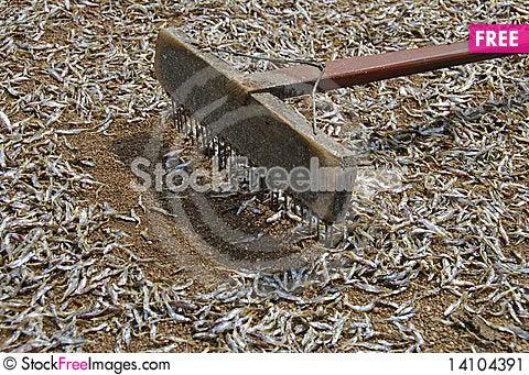 Free Fish Stock Image - 14104391