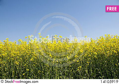 Free Yellow And Blue Royalty Free Stock Images - 14105919