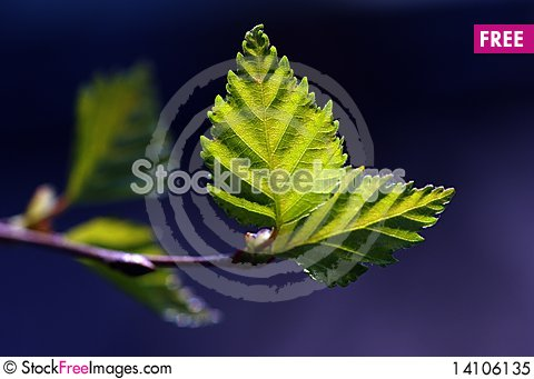 Free Green Leaves With Sun Ray Royalty Free Stock Photo - 14106135