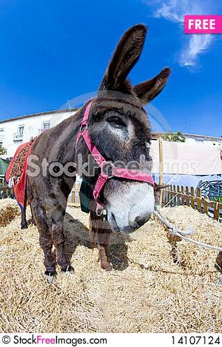 Free Farmland And  Donkey Stock Images - 14107124