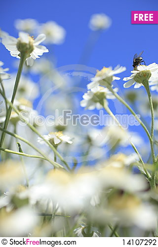 Free Summer Stock Photography - 14107292