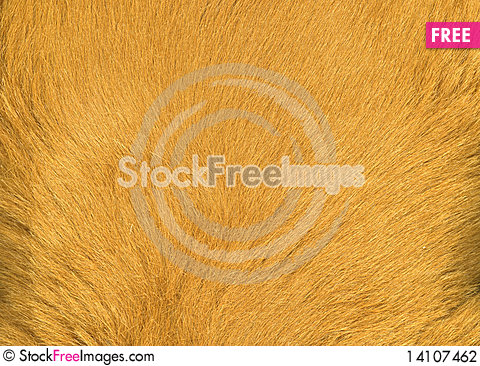 Free Fur Stock Photography - 14107462
