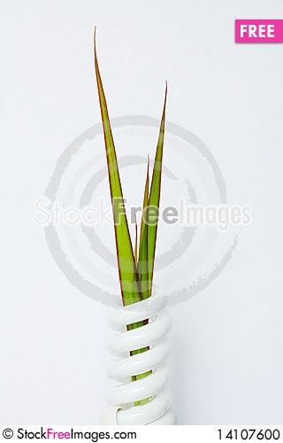 Free Energy-saving Lamp Stock Photo - 14107600