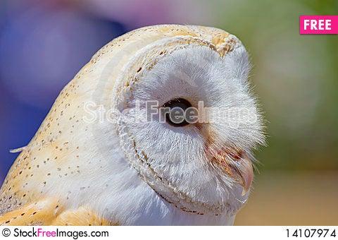 Free Owl Portrait Stock Images - 14107974