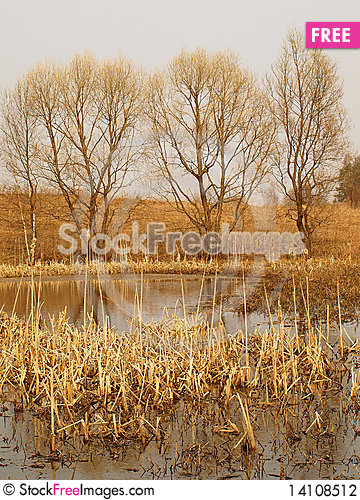 Free Old Pond Stock Photography - 14108512