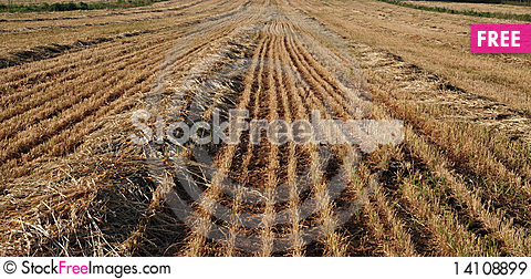 View on field whereupon harvest Stock Photo