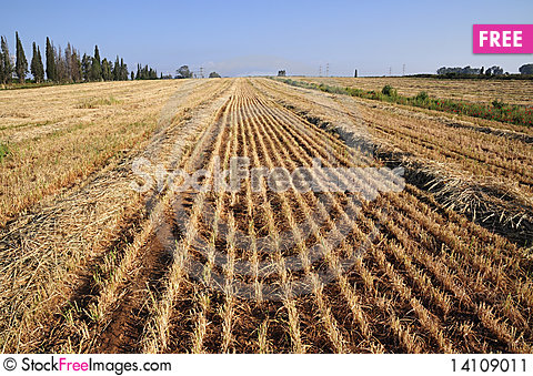 Free View On Field Whereupon Harvest Stock Image - 14109011