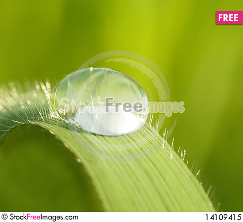 Free Morning Dew On A Green Grass Royalty Free Stock Photo - 14109415