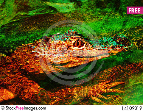 Free Crocodile In Water Royalty Free Stock Images - 14109819