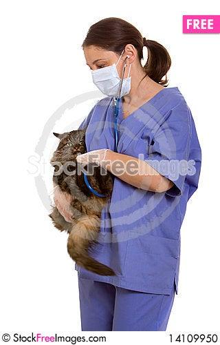Free Veterinarian And Cat Stock Photo - 14109950
