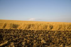 Free Wheat Field Stock Images - 14100194