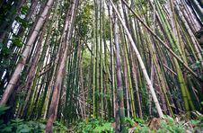 Free Bamboo Royalty Free Stock Image - 14100546