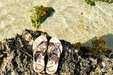 Free Shoes And Coral Reef Stock Photos - 14102963