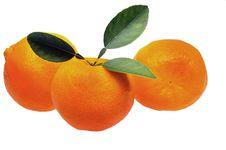 Free Mandarin Or Tangerine Royalty Free Stock Photos - 14104628