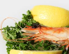 Free Fly Seafood Feast Royalty Free Stock Images - 14106329