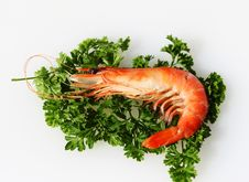 Free Australia Prawn Royalty Free Stock Image - 14106456