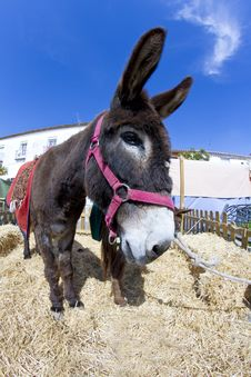 Free Farmland And  Donkey Stock Images - 14107124