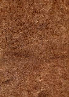 Free Hard Leather Royalty Free Stock Photo - 14107725