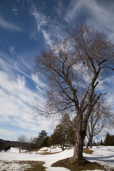 Free Blue Sky_Clouds With Bare Tree Royalty Free Stock Image - 14108346