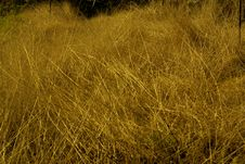 Free View Of Golden Hayfield Stock Photography - 14108742