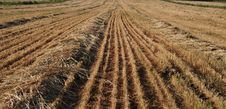 View On Field Whereupon Harvest Royalty Free Stock Images