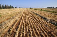 View On Field Whereupon Harvest Stock Image