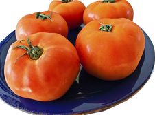 Free Tomatoes On A Cobalt Blue Plate Stock Photography - 14109512