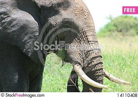 Free Africa Tanzania Elephant Image Royalty Free Stock Photos - 14110408