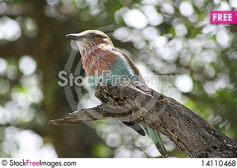 Free Africa Tanzania Close-up Bird Royalty Free Stock Photos - 14110468
