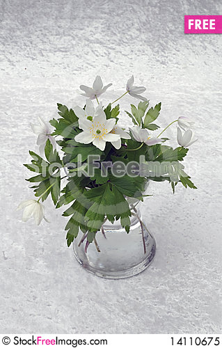 Free Still-life In Windflower Royalty Free Stock Photo - 14110675
