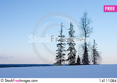 Free Silhouettes Of Trees Stock Images - 14111084