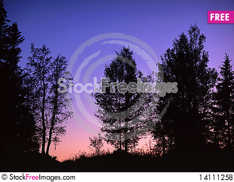 Free Sunrise In Forest Royalty Free Stock Photos - 14111258