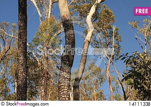 Free Trees Royalty Free Stock Photos - 14111338