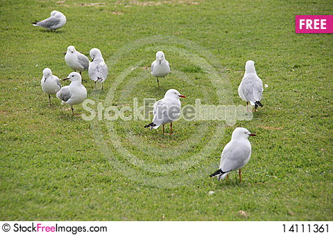 Free Seagull Stock Image - 14111361