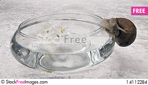 Free Vase And Snail Stock Images - 14112284