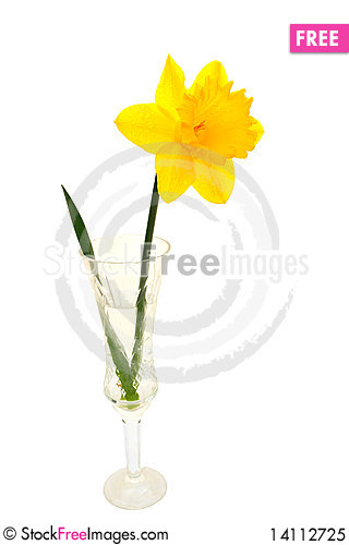 Free Yellow Daffodil Royalty Free Stock Photo - 14112725