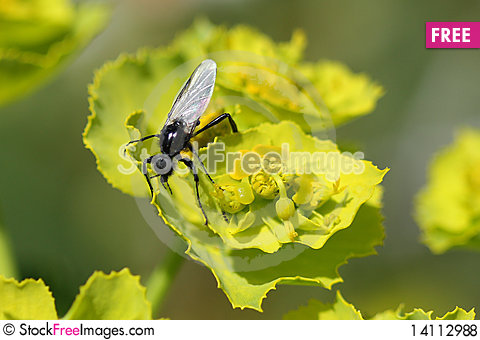 Free Insect Royalty Free Stock Photos - 14112988