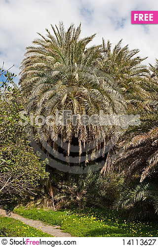 Free Preveli Palm Forest Royalty Free Stock Photography - 14113627