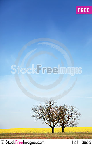 Free Trees Near Rape Field. Royalty Free Stock Image - 14113866