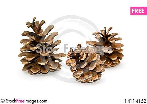 Free Cones Of Pine. Stock Photography - 14114152