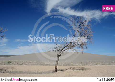 Free Tree With Sky Royalty Free Stock Images - 14114659
