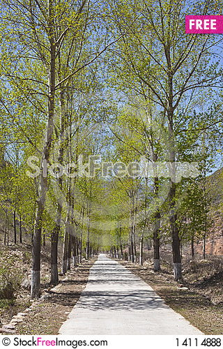 Free Concrete Road In Grove Royalty Free Stock Photos - 14114888