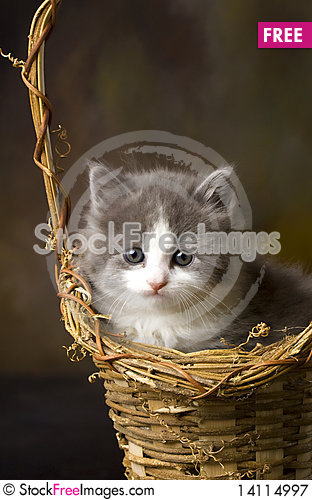Free Grey And White Kitten In Basket Royalty Free Stock Photography - 14114997