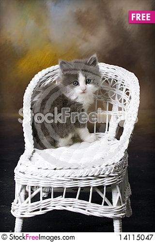 Free Grey And White Kitten On Wicker Chair Royalty Free Stock Photography - 14115047