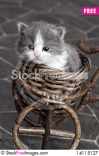 Free Grey And White Kitten In Basket Royalty Free Stock Photography - 14115127