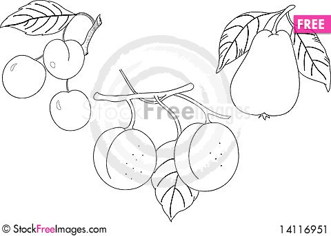 Free Fruit (cherry, Peach, Pear) To Color Stock Image - 14116951