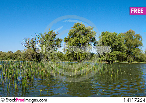 Free Water Landscape In Danube Delta Stock Images - 14117264