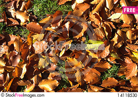 Free Herbstlaub Stock Photo - 14118530