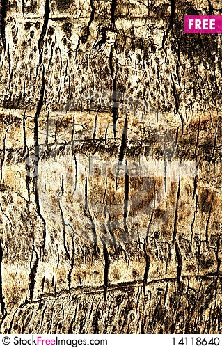Free Abstract Texture An Old Dry Cracked Stock Photo - 14118640