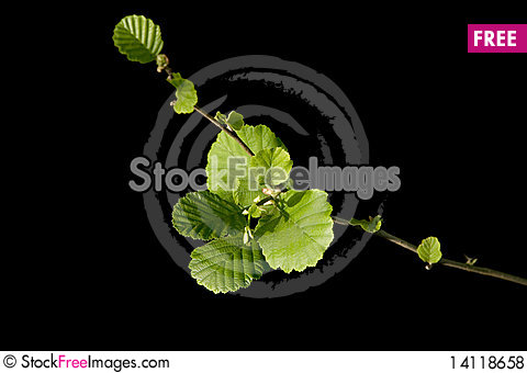 Free Plant Branch Royalty Free Stock Photos - 14118658